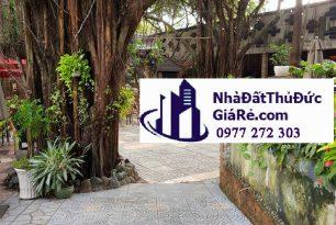 Cho thuê mặt bằngkinh doanh 1000m2, P Bình Thọ ,Quận ThủĐức